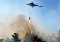 Muğla ve İzmir'de orman yangınları sürüyor