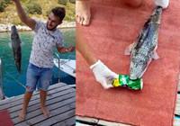 Balon balığı teneke içecek kutusunu parçaladı