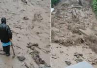 Çayeli'nde dehşete düşüren görüntü