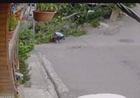 İstanbul'da bisikletli çocuğun üzerine ağaç devrildi