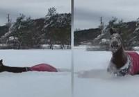 Kar keyfi yapan atın görüntüsü viral oldu!