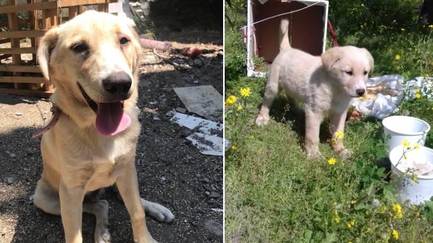 Hatay'da bir cani bıçakladığı köpeği serbest kalınca öldürdü!