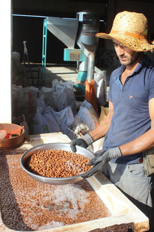Fıstıkta zorlu hasat: Kilosu 800 liradan satılıyor - Sayfa 2