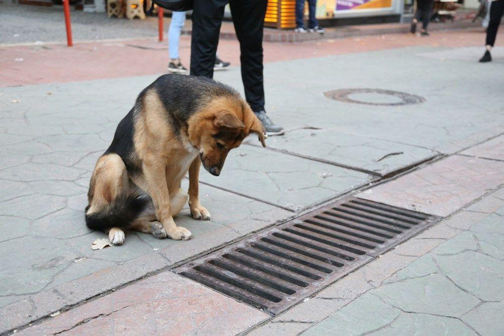 Mazgalı izleyen köpeğin sırrı ortaya çıktı! - Sayfa 3
