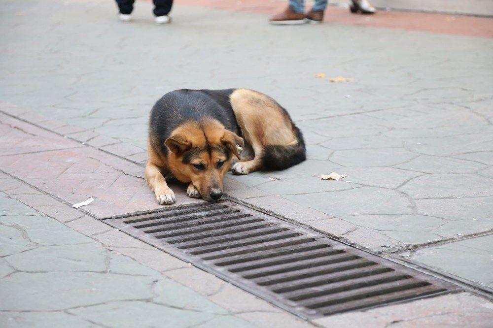 Mazgalı izleyen köpeğin sırrı ortaya çıktı! - Sayfa 4
