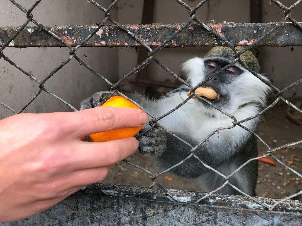 Düzce'de sahibinin terk ettiği tropikal maymun koruma altına alındı - Sayfa 1