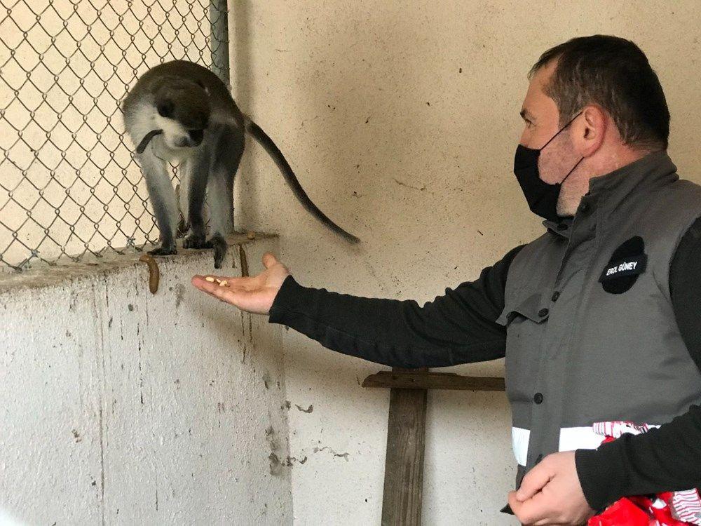 Düzce'de sahibinin terk ettiği tropikal maymun koruma altına alındı - Sayfa 2
