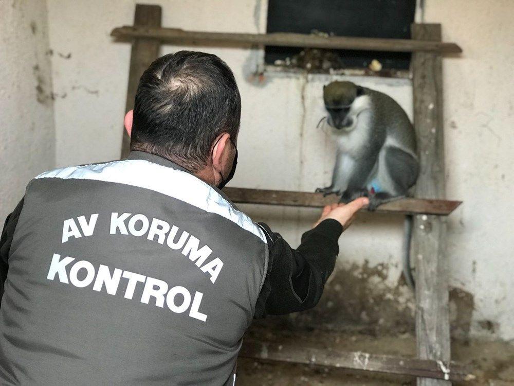 Düzce'de sahibinin terk ettiği tropikal maymun koruma altına alındı - Sayfa 4