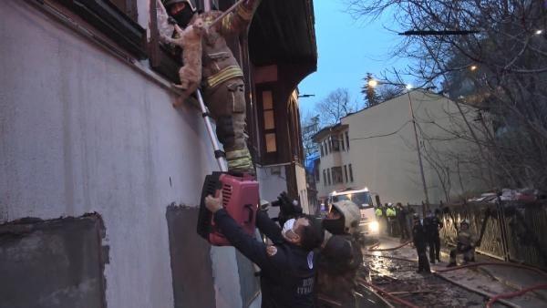 Bursa'da 120 yıllık tarihi bina yangında çöktü; çok sayıda sokak kedisi yanarak öldü - Sayfa 2
