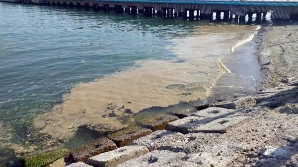 Deniz salyası Tekirdağ'da yeniden ortaya çıktı - Sayfa 4