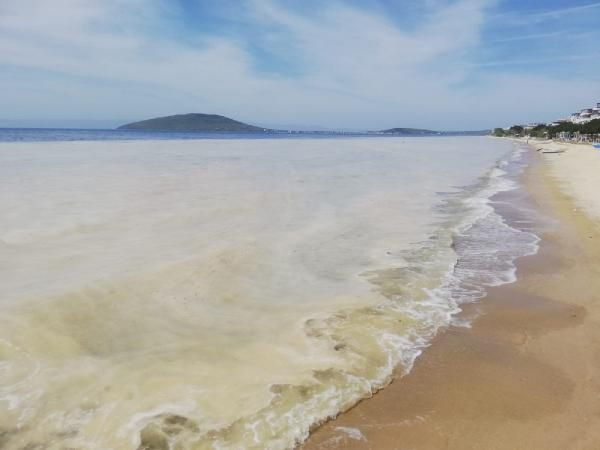 Avşa Adası kıyılarını deniz salyası kapladı - Sayfa 1