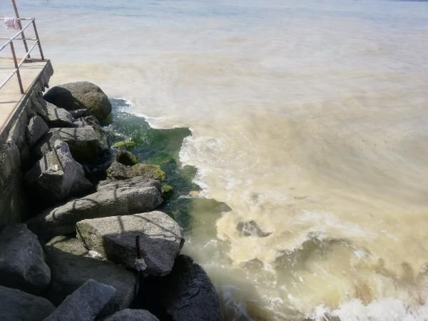 Avşa Adası kıyılarını deniz salyası kapladı - Sayfa 2