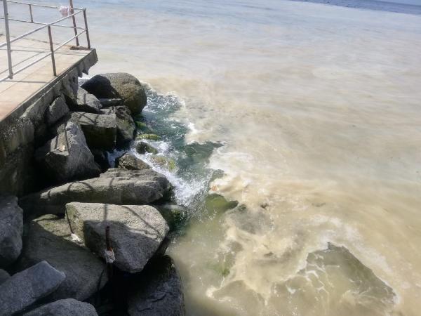 Avşa Adası kıyılarını deniz salyası kapladı - Sayfa 4