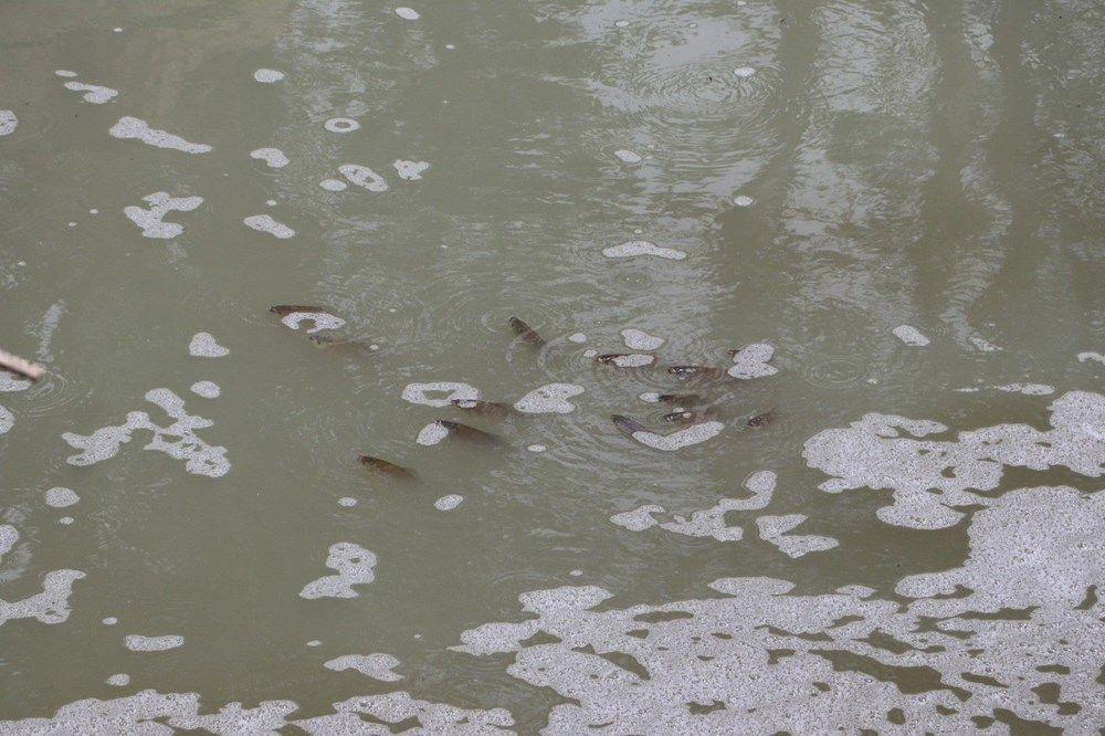 Tekirdağ'da tedirgin eden görüntü: Toplu balık ölümleri - Sayfa 1