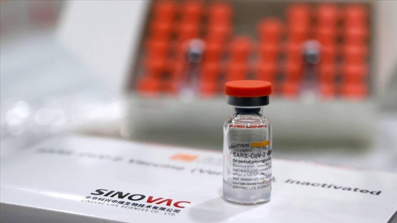 Aşı antikora nasıl etki ediyor? Sinovac araştırması