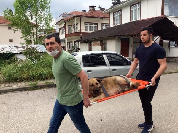 Otomobil çarpan köpeği sedye ile veterinere taşıdılar - Sayfa 1
