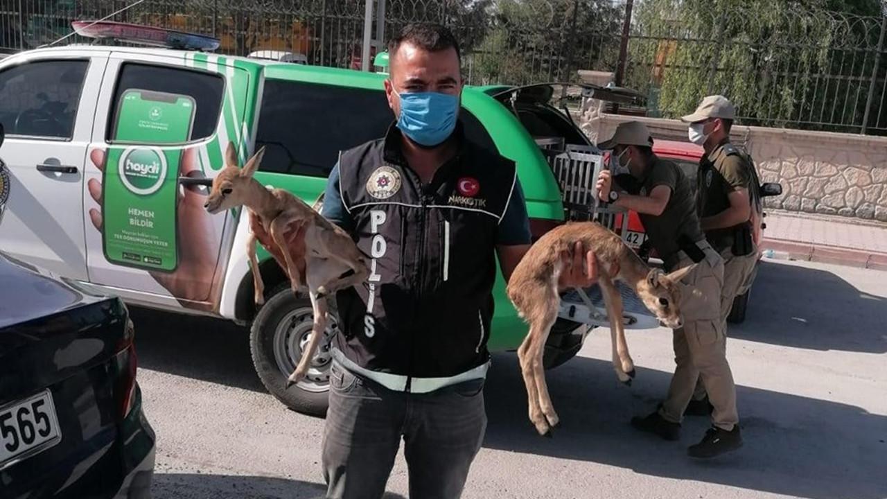 Polisin durdurduğu otomobilden ceylan yavruları çıktı