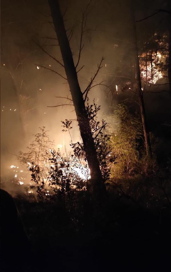 Adana Kozan'da orman yangını - Sayfa 1