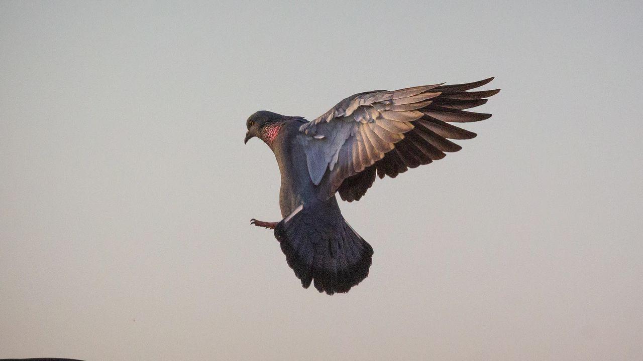 İstanbul'da 'Batı Nil Virüsü' tespit edildi: 'Ölü kuşlara dokunup ellerini ağızlarına götürmesinler' - Sayfa 1
