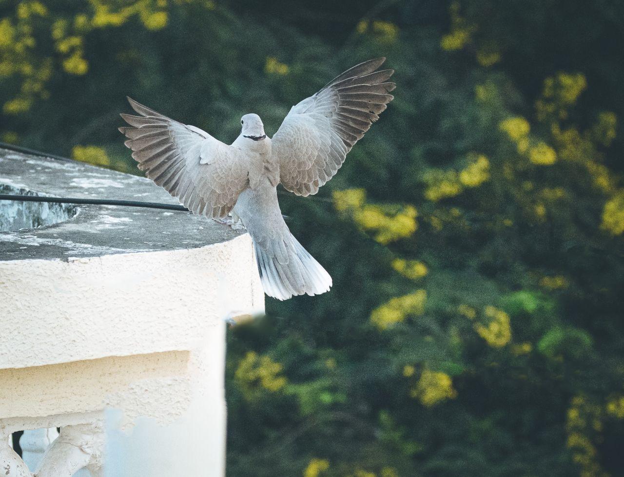İstanbul'da 'Batı Nil Virüsü' tespit edildi: 'Ölü kuşlara dokunup ellerini ağızlarına götürmesinler' - Sayfa 2
