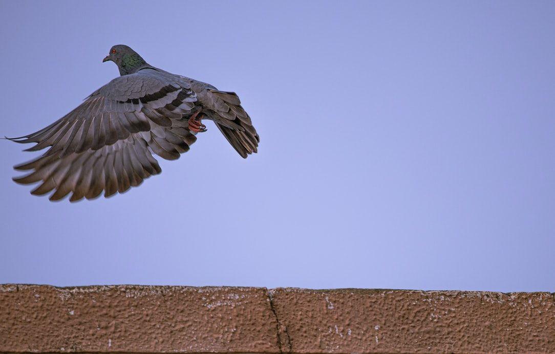 İstanbul'da 'Batı Nil Virüsü' tespit edildi: 'Ölü kuşlara dokunup ellerini ağızlarına götürmesinler' - Sayfa 4