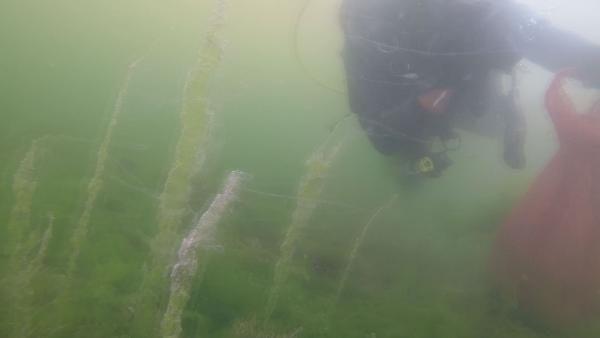 Müsilajın su altındaki etkisini görüntüleyen dalgıç: Aşağıda büyük bir felaket yaşanıyor - Sayfa 1