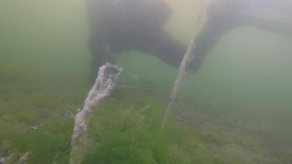 Müsilajın su altındaki etkisini görüntüleyen dalgıç: Aşağıda büyük bir felaket yaşanıyor - Sayfa 2
