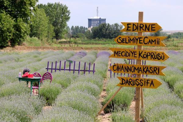 Edirne'de 'Lavanta Tarla Günleri' ile mor bahçeler şenlendi - Sayfa 1