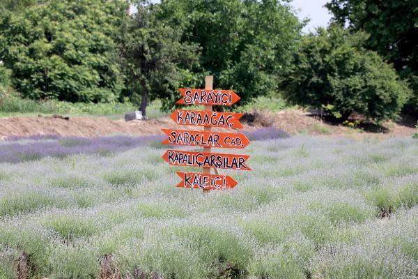 Edirne'de 'Lavanta Tarla Günleri' ile mor bahçeler şenlendi - Sayfa 2
