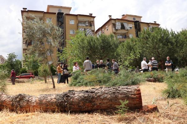 Özel arazideki ağaç kesimi tepki çekti - Sayfa 2