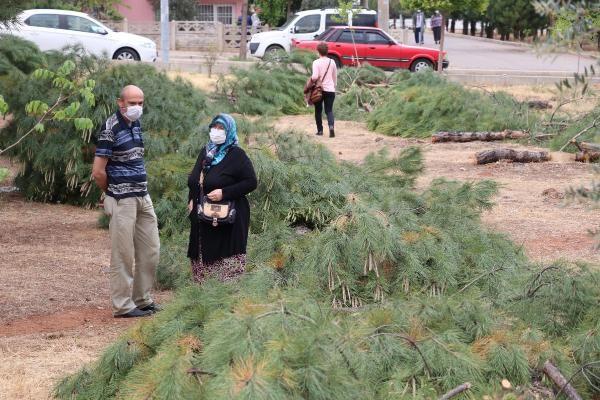 Özel arazideki ağaç kesimi tepki çekti - Sayfa 3