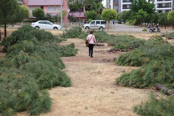 Özel arazideki ağaç kesimi tepki çekti - Sayfa 4