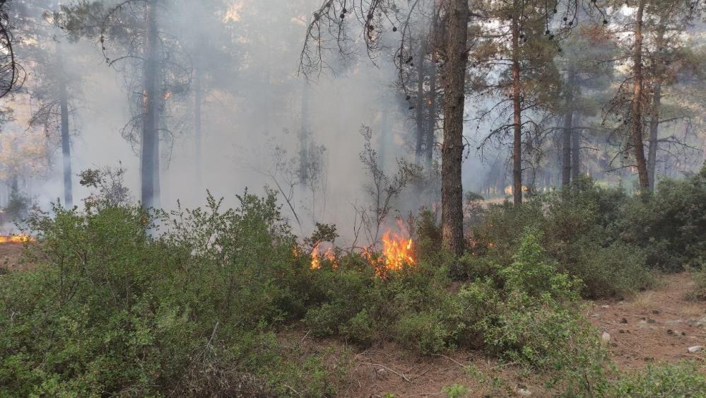 Orman kahramanları çalılarla yangının büyümesini engelledi - Sayfa 1