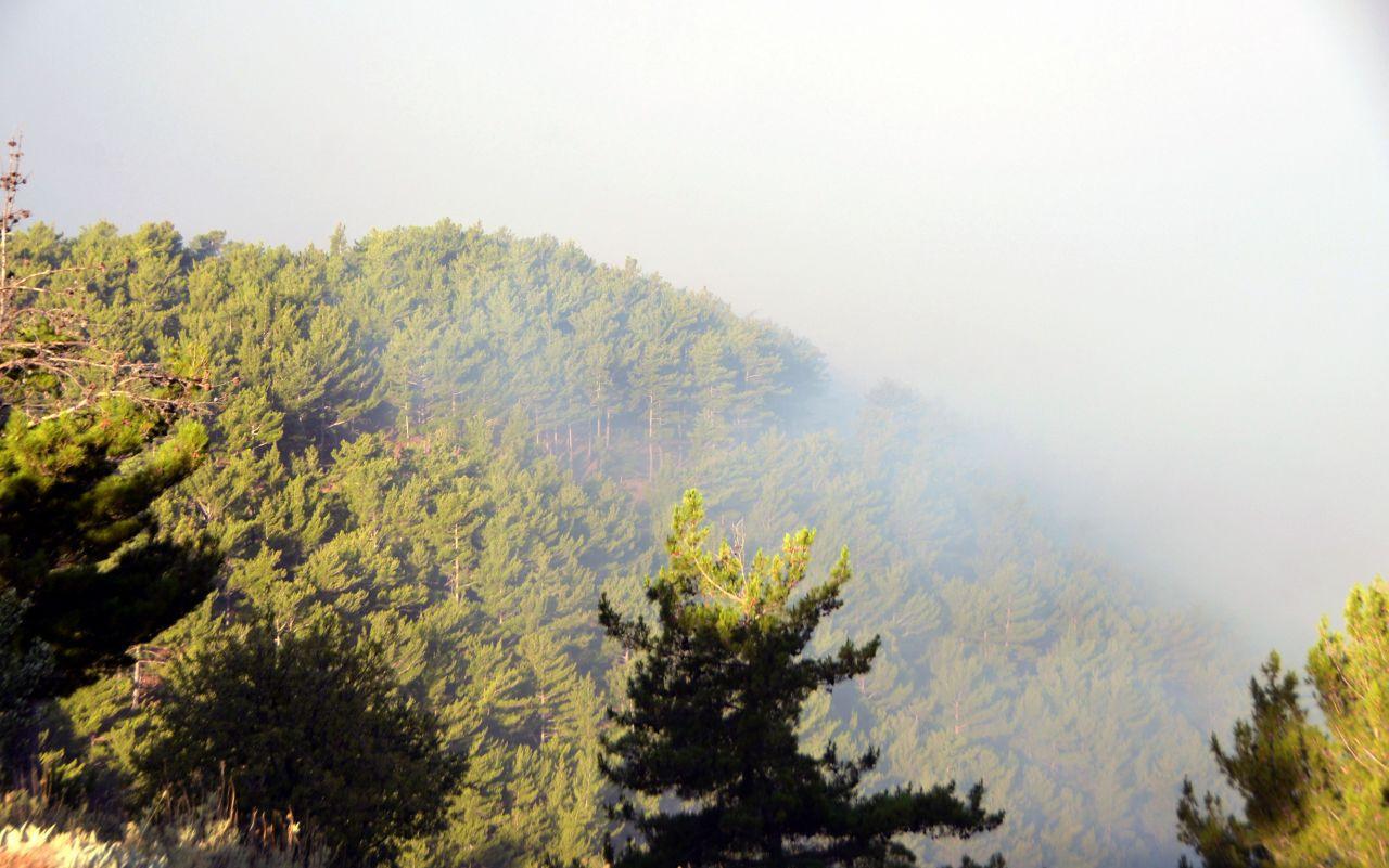 Mersin ve Hatay'daki orman yangınları kontrol altına alındı - Sayfa 3