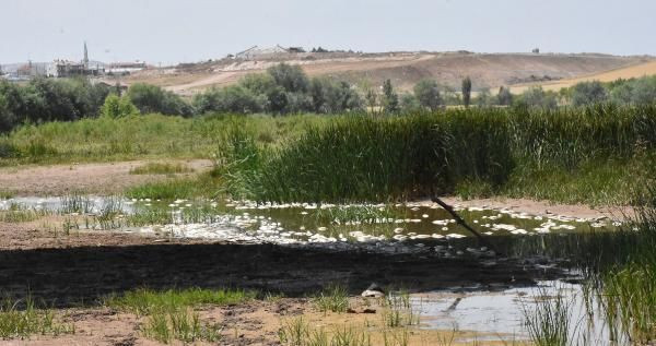Kızılırmak'taki balık ölümlerinin nedeni belli oldu - Sayfa 2