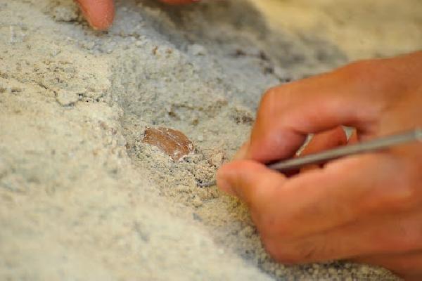 Çobanın keşfettiği mağarada M.Ö. 10 bin yılından kalma 'yiyecek' bulundu - Sayfa 1