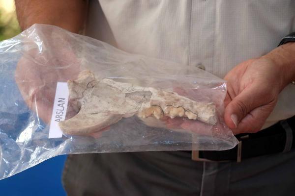 Kayseri'de 4 bin yıl öncesine ait aslan kemiği bulundu - Sayfa 3