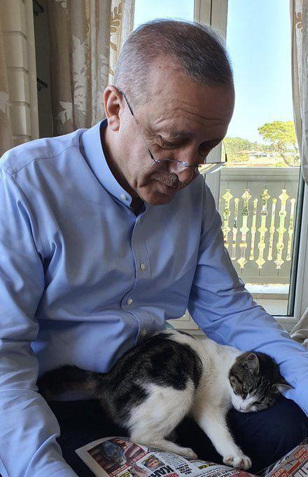 Cumhurbaşkanı Erdoğan torununun kedisiyle fotoğrafını paylaştı - Sayfa 1