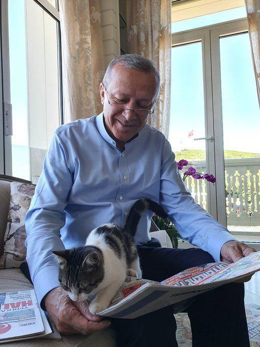Cumhurbaşkanı Erdoğan torununun kedisiyle fotoğrafını paylaştı - Sayfa 2