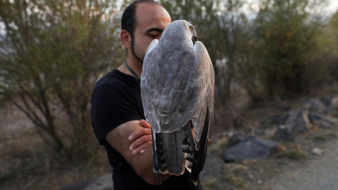 Kırmızı listedeki 'bozkır delicesi' Türk kuş bilimcilerce uydudan takip ediliyor - Sayfa 1