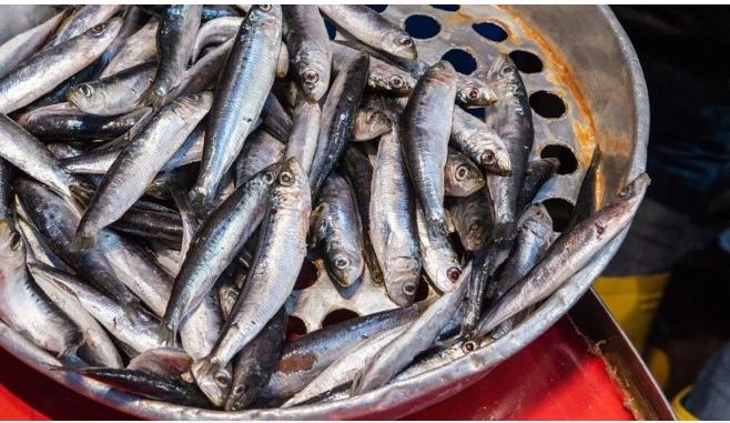 Marmara'dan çıkan balık tüketilir mi? - Sayfa 3