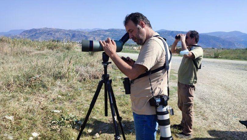 Kara Taşkuşu, Türkiye'de ilk defa Hatay'da görüldü - Sayfa 1