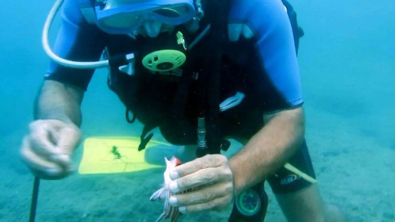 Antalya'da elektrik gibi çarpan 'denizanası' uyarısı - Sayfa 4