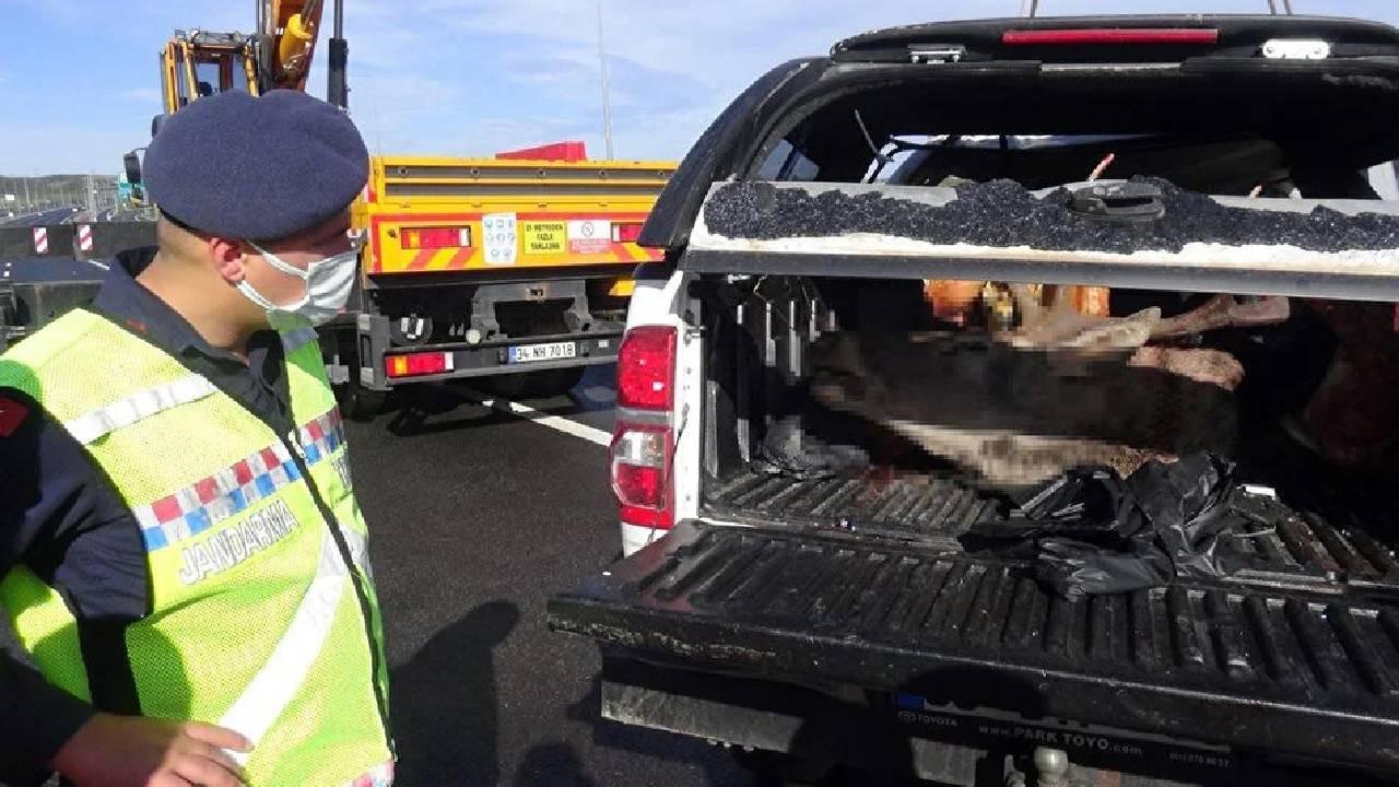 Avcılar kaza yaptı, bagajdan avlanması yasak kızıl geyik çıktı!