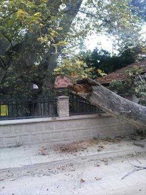 Bin 257 çınar yıkıldı