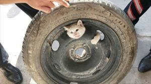 Yaramaz kedi öyle bir yere girdi ki