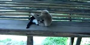 Yaramaz maymun kediyi maymun etti