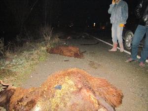 Otomobil sürüye daldı, 28 koyu telef oldu