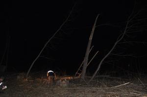 Kestiği ağaç sonu oldu