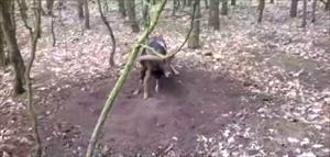 Boynuzlarını ağaca sıkıştıran koçu böyle kurtardı